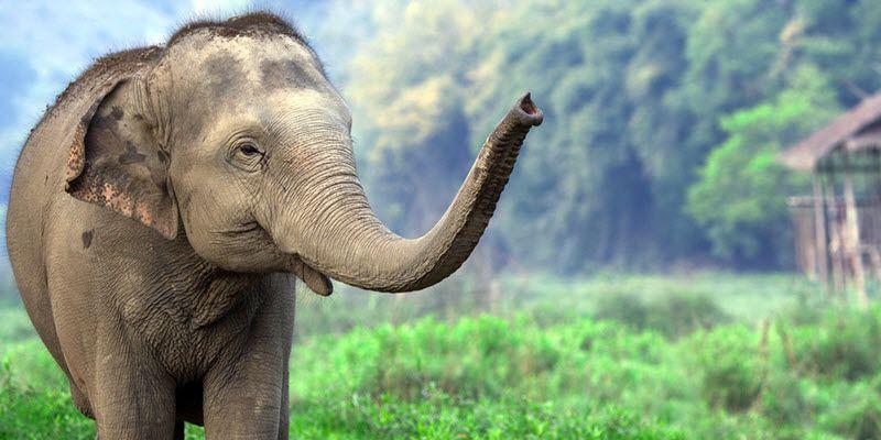 Quel lieu choisir pour voir les éléphants en Thaïlande ?