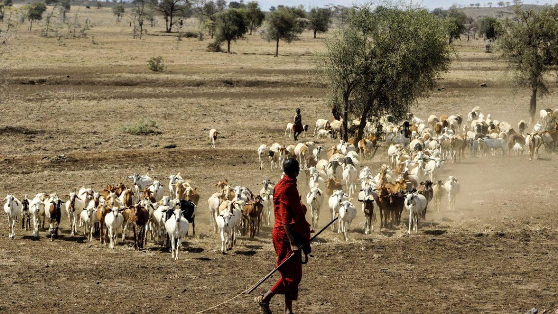 Guide touristique en Tanzanie : placer son séjour sous de beaux jours