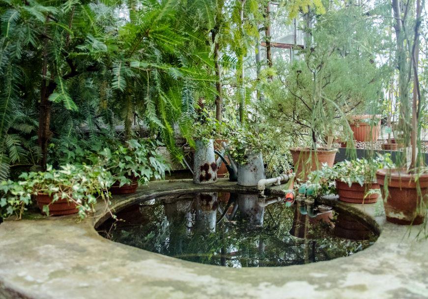 Quelques conseils pour la conception d'un bassin de jardin