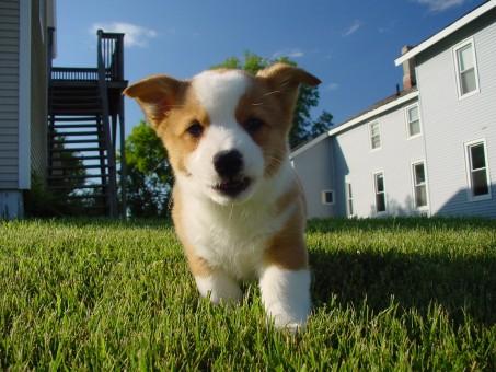 Comment choisir une agence de location d'animaux?